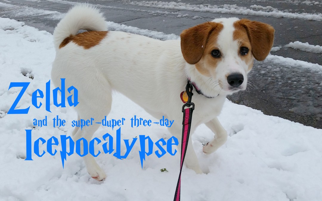 Zelda and the Super-Duper Three-Day Icepocalypse